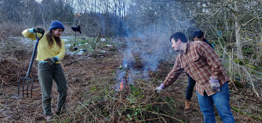 Removing and burning invasive species and Brambles