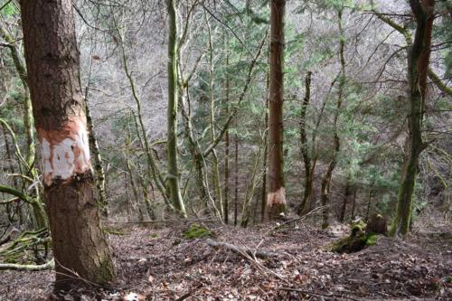 Currie Wood – March 2014